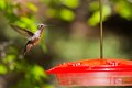 Hummingbird flying a closeup of a near a feeder Royalty Free Stock Photography