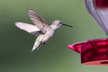 Hummingbird flying towards nectar feeder Royalty Free Stock Photo