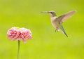 Hummingbird hovering close to a flower Stock Photo