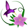 Hummingbird and lily Royalty Free Stock Image