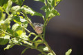 Hummingbird nest Royalty Free Stock Photo
