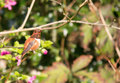 Hummingbird sitting on branch Stock Image