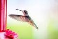 Hummingbird stop motion in flight Stock Image