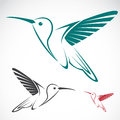 Hummingbird vector image of an Stock Photography