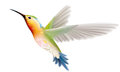 Hummingbird on a white background illustration Royalty Free Stock Image