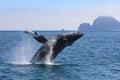 Humpback Whale Breaching Kenai Fjords National Park Alaska Royalty Free Stock Photo