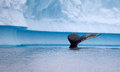 Humpback whale fluke in antarctic waters Stock Images