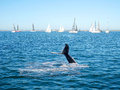 Humpback whale tail and sailing boat Royalty Free Stock Photo
