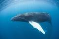 Hrb veľryba 2