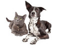 Hund und cat laying looking up Lizenzfreies Stockfoto