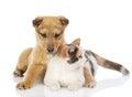 Hunden och katten har en vila tillsammans Arkivbilder