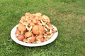 Hunderds of mushrooms small suillus on white plate lying on green grass Royalty Free Stock Image