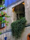 Hundertwasser house balcony closeup of vines growing from a of the in vienna austria Royalty Free Stock Photo