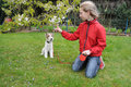Hundetraining Stockbild