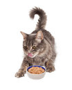 Hungry Cat Eating Bowl of Food Royalty Free Stock Photo