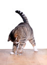 Hungry cute cat on table Royalty Free Stock Images