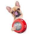 Hungry dog bowl french bulldog holding food and licking with tongue isolated on white background Stock Photos