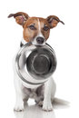 Hungry dog food bowl Royalty Free Stock Image