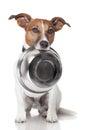 Hladný pes jedlo misa