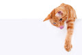Hungry Playing Cat Sign Royalty Free Stock Photo