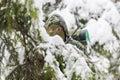 Hunter hidden in the backwoods winter Stock Photos