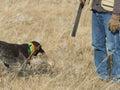 Hunter and his dog Royalty Free Stock Photo