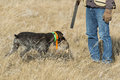 Hunter and his dog a with retrieving him a grouse in north dakota Stock Image