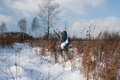 The hunter winter hunting for hares on first snow Royalty Free Stock Photo