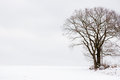 Hunting oak tree an used as a stand in a winter landscape Stock Images