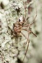 Hunting spider on wood Stock Photos