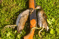 Hunting trophy crake gun and two on successful on bogs Stock Photo