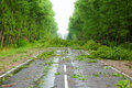 After hurricane fallen trees willow on road Royalty Free Stock Photo