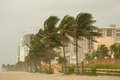 Hurricane gusts impact of force winds from gustav hit florida beach causing swirling sands and palm trees to sway view of Royalty Free Stock Photography
