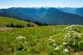 Hurricane ridge looking out onto hurrican in olympic national park in washington usa Stock Images