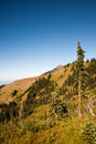 Hurricane ridge in the olympic peninsula Royalty Free Stock Images