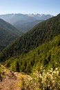 Hurricane ridge a viewpoint of in olympic national park in washington usa Royalty Free Stock Image