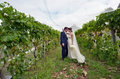 Husband and wife on their wedding day kiss in a vineyard concept of relationship marriage copy space Stock Photography