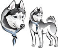 Husky dog in bandana vector drawing of the laika Royalty Free Stock Photography