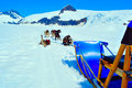 Husky dogs and sled musher camp on top of mendehall glacier in juneau ice field alaska Stock Image