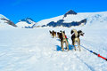 Husky dogs and sled musher camp on top of mendehall glacier in juneau ice field alaska Royalty Free Stock Image