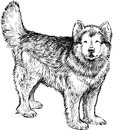 Husky vector image of a standing cute dog Royalty Free Stock Photo