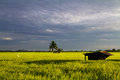 Hut in rice field Royalty Free Stock Photography