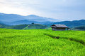 Hut and terrace rice field on the mountain Royalty Free Stock Images