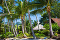 Hut with a thatched roof among coconut palms Royalty Free Stock Photo