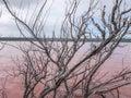 Hutt Lagoon's Pink Lake Royalty Free Stock Photo