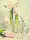 Hyacinth arrangement Royaltyfria Bilder