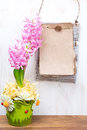 Hyacinth in flower pot and paper for text beautiful pink vertical Royalty Free Stock Images