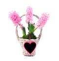 Hyacinth and heart flower with decoration herat with copy space Stock Photos