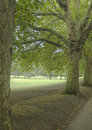 Hyde park grass and trees in london uk Royalty Free Stock Images