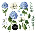 Hydrangea, cotton flowers and eucalyptus branch isolated on white background. Vector illustration
